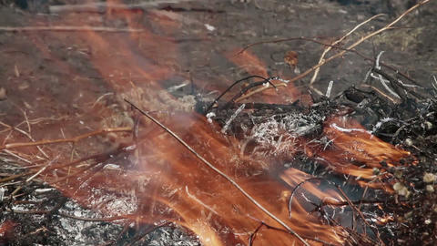 burning leaves Stock Video Footage