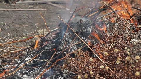 bonfire. Set footage Stock Video Footage