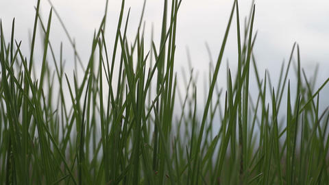 Green grass against the sky Stock Video Footage