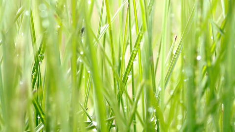 waterdrops on grass Stock Video Footage