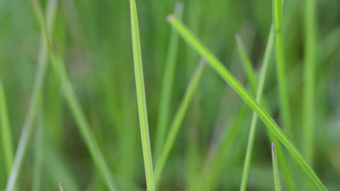 green grass. Set footage Stock Video Footage