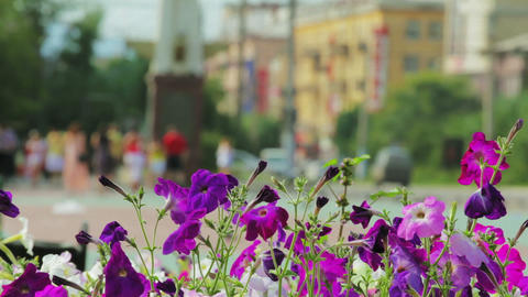 Petunia flowers and walking people in city park Stock Video Footage