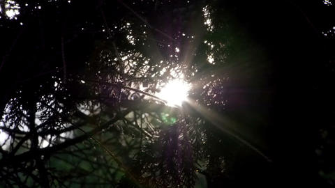 Sunshine in the morning in the forest Stock Video Footage