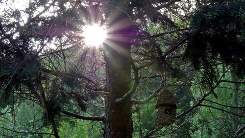 Empty birdhouse on tree Stock Video Footage