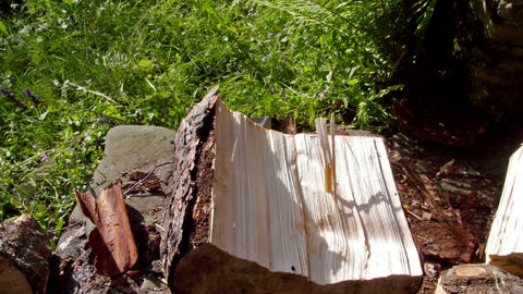 Crashing big log of wood in the machine Stock Video Footage