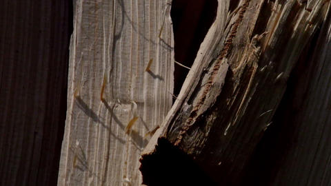 Close up of log of wood being chopped in the machi Stock Video Footage