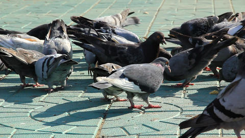 Pigeons feed on the sidewalk Stock Video Footage
