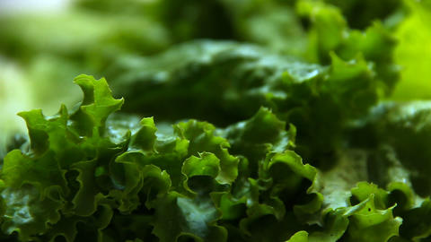 Dolly shot of green salad leaves Stock Video Footage