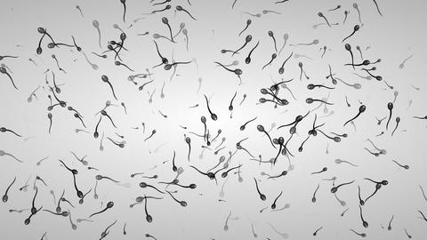 Motion background with moving spermatozoon Stock Video Footage