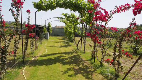 garden Stock Video Footage