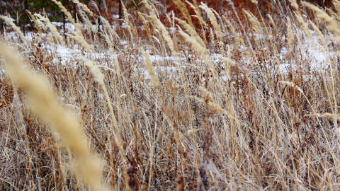 Autumn dry yellow grass swaying in the wind Footage