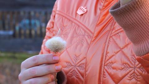 Woman rips dandelion flower Stock Video Footage