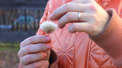 Woman rips dandelion flower Stock Video Footage