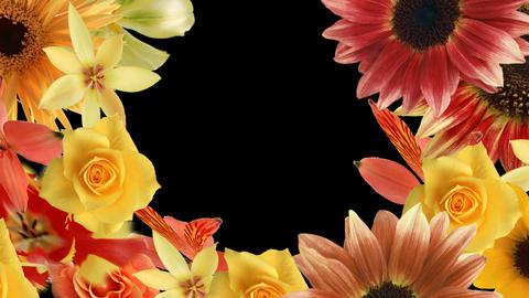Flower7132791 stock footage