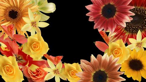 Flower7132791 Stock Video Footage