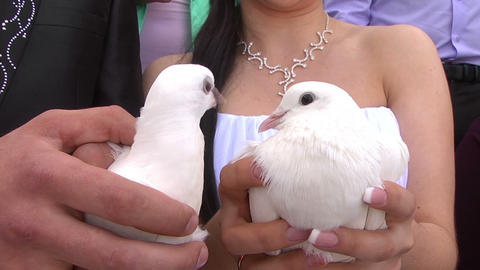 Bridal With Doves Stock Video Footage