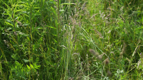 Walking in the grass Stock Video Footage