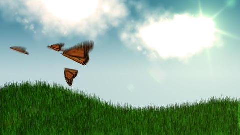 Butterflies Animation