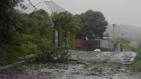 Trees are down and wind is blowing during a large Stock Video Footage