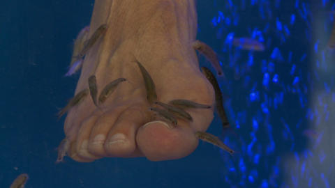 Fish nibble away at peoples toes and feet at a fis Stock Video Footage