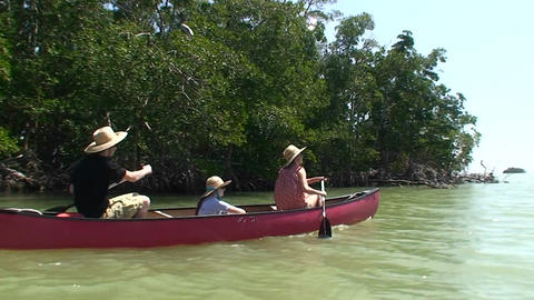 A canoe is rowed through a cypress swamp Stock Video Footage