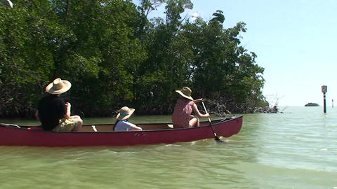 A canoe is rowed through a cypress swamp Footage