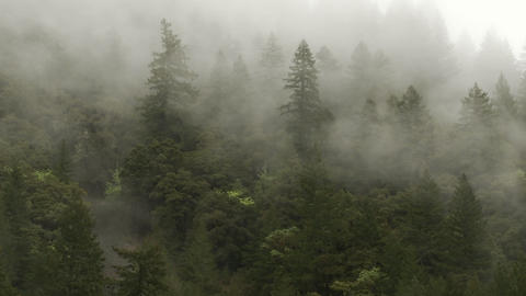 A foggy day in the forest Stock Video Footage