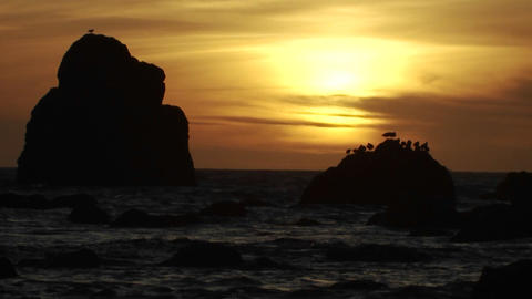 Seagulls perch on a rock at sunset along the Orego Footage