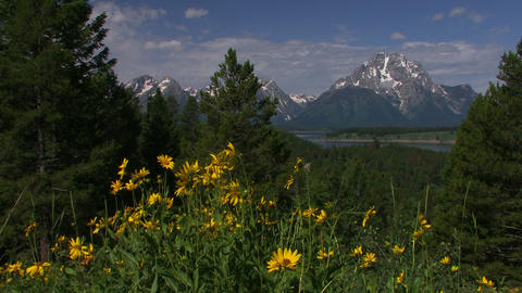 Springtime and flowers with the Grand Tetons backg Stock Video Footage