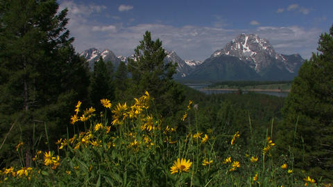 Springtime and flowers with the Grand Tetons backg Footage