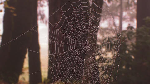 A spider weaves its web in golden morning light Footage