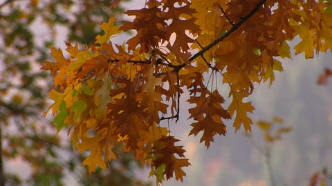 Vivid autumn colors light up the trees Stock Video Footage
