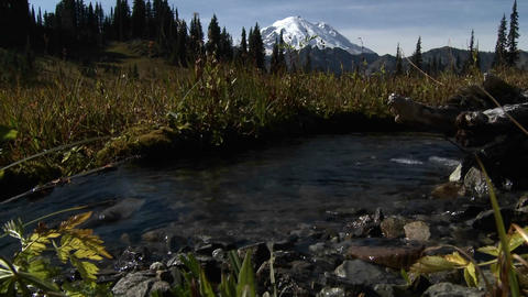 A beautiful small stream flows through the Cascade Stock Video Footage