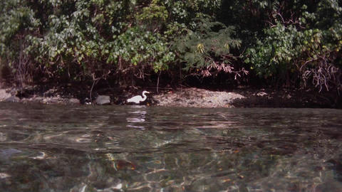 The camera follows a bird swimming on a river from Stock Video Footage