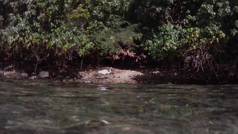 The camera follows a bird swimming on a river from Footage