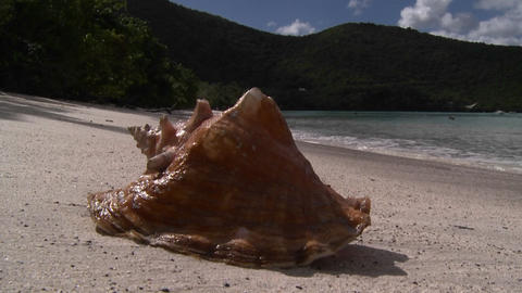 A gorgeous conch shell sits on a tropical beach Stock Video Footage