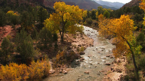A river flows through a lovely fall forest Stock Video Footage