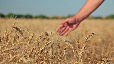 Good harvest Stock Video Footage