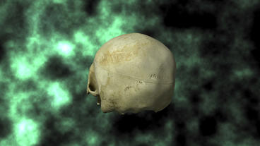 Actual Human Skull, 3D Scan, rotating on BG 25P Animation