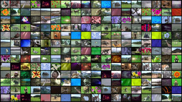 Video Wall Element 18x13 25P Stock Video Footage