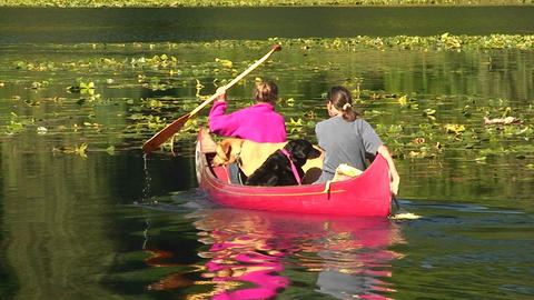 Women paddle in a red canoe with their two dogs Footage