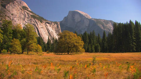 Trees stand at the edge of a mountain meadow in Yo Footage