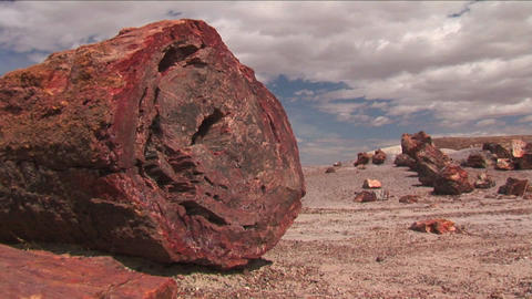 The remains of a petrified tree in the Arizona Pet Stock Video Footage