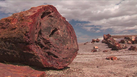 The remains of a petrified tree in the Arizona Pet Footage
