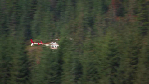 A helicopter flies over a pine forest at Mt. St. H Stock Video Footage