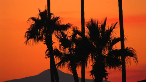 An orange sunset behind the silhouette of palm tre Footage