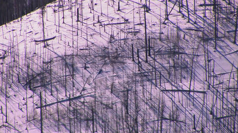 Bare trees on the side of a snow covered mountain Stock Video Footage