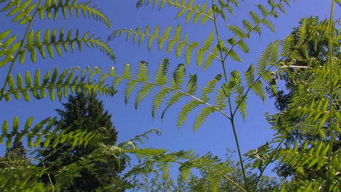 Fern leaves blow in the wind Stock Video Footage