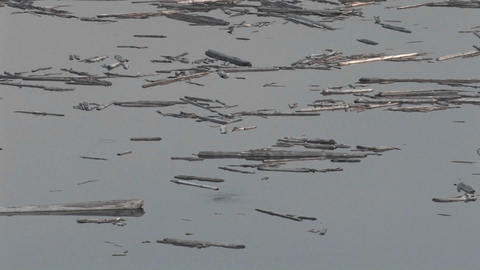 Splinters of wood float on still water at Mt. St. Stock Video Footage