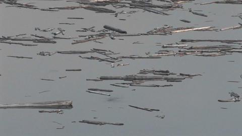 Splinters of wood float on still water at Mt. St. Stock Video Footage